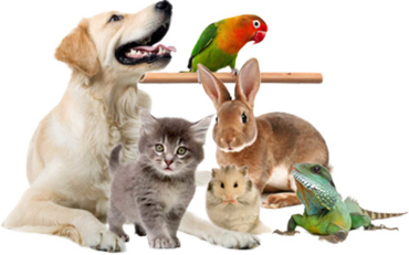 Изображение для категории Зоотовары